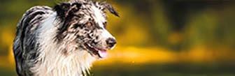 Schecker laat honden harten sneller kloppen